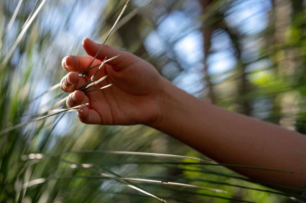 Person's hand gently touches grass stalks.