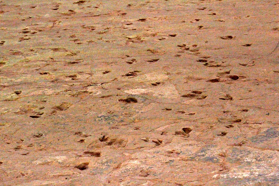 Rock surface covered in deeply-incised distinct dinosaur footprints.