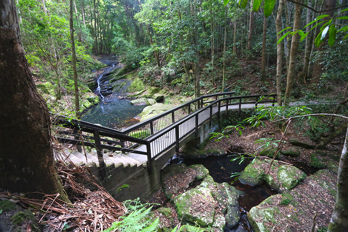 Steps with handrails descend into a gully and cross a creek surrounded by forest.