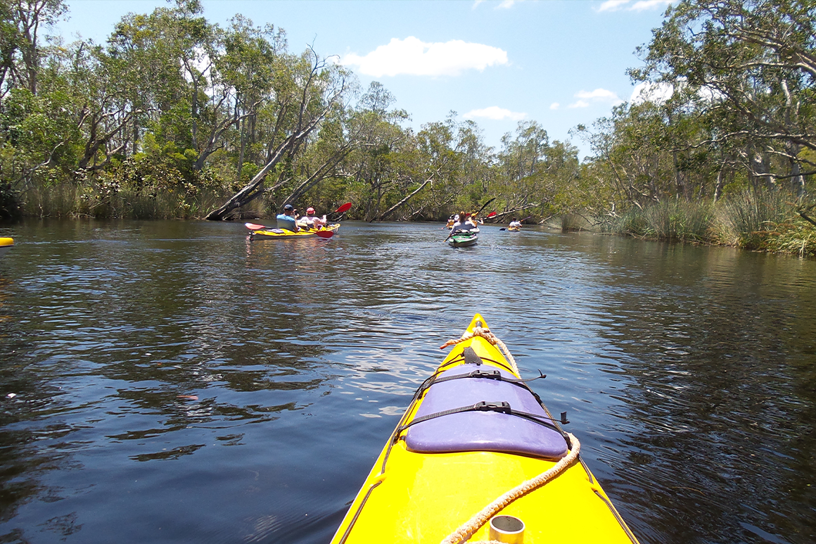 Several kayaks paddle up a narrow river channel fringed by forest.