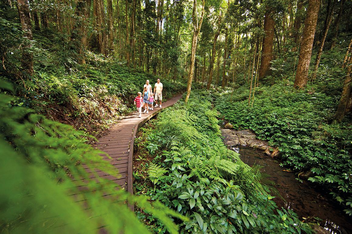 Family walking along low level wooden boardwalk near shallow creek amongst forest of tall trees.
