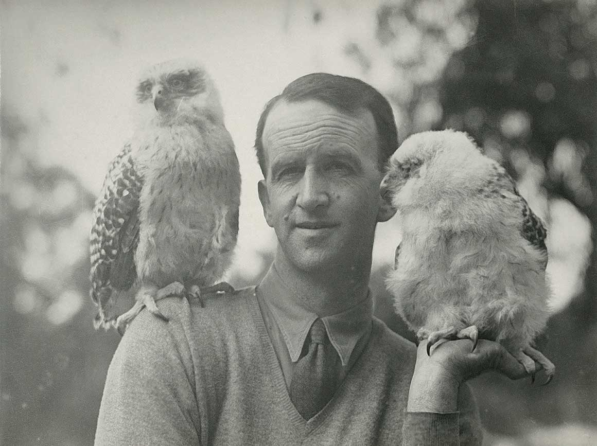 Black and white image of Dr David Fleay posing with two powerful owls, one on his shoulder, the other resting on his hand.