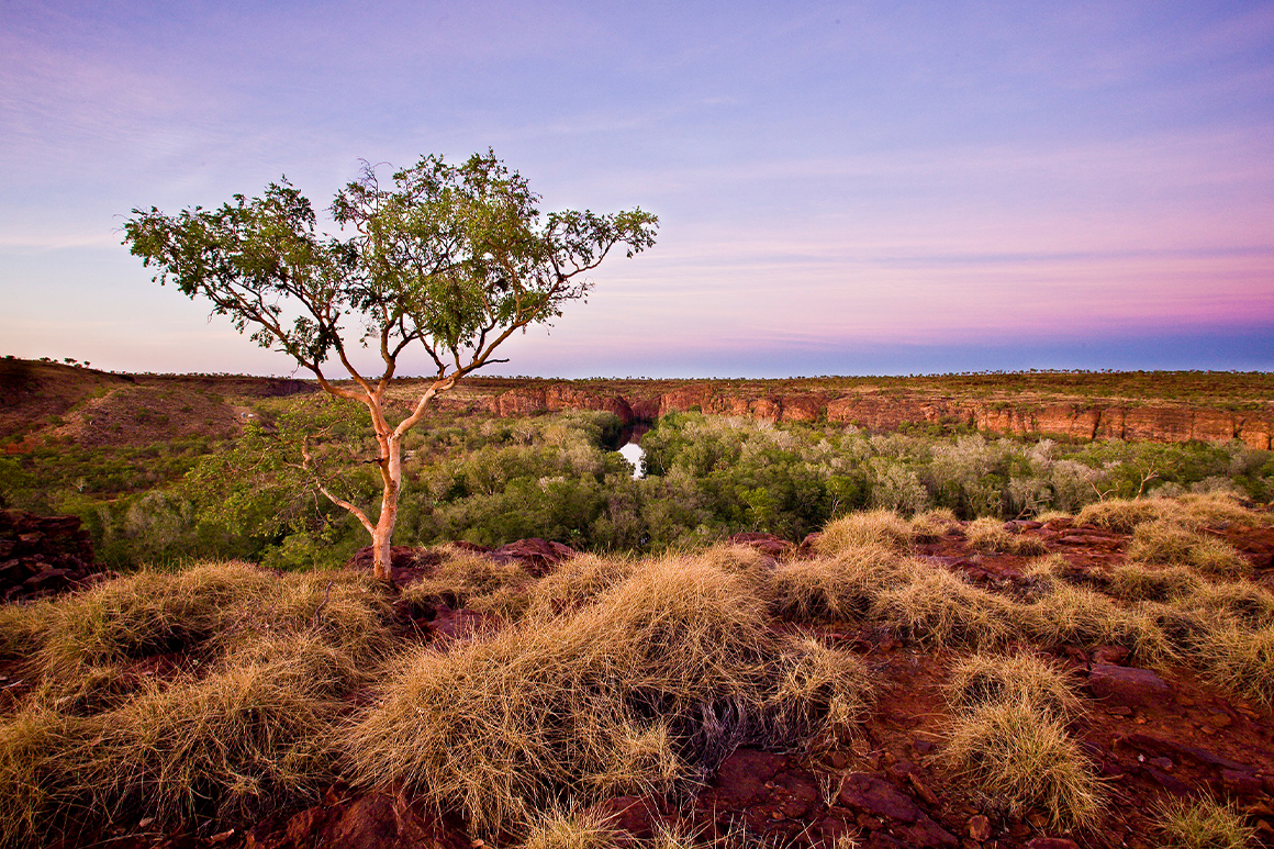 A lone tree stands atop a flat topped sandstone 'stack' with views over the gorge, creek and surrounding savannah landscape.